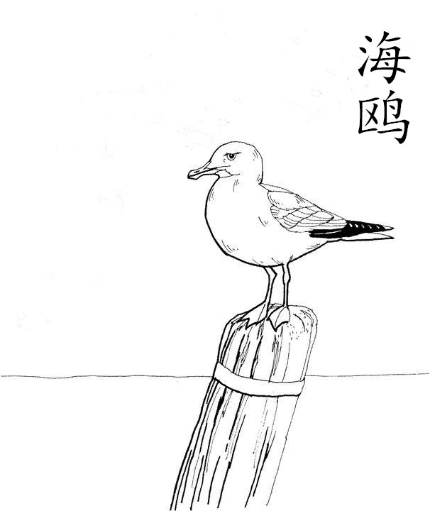 海鸥简笔画 小动物